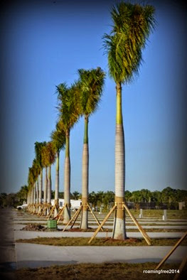 New Palm Trees