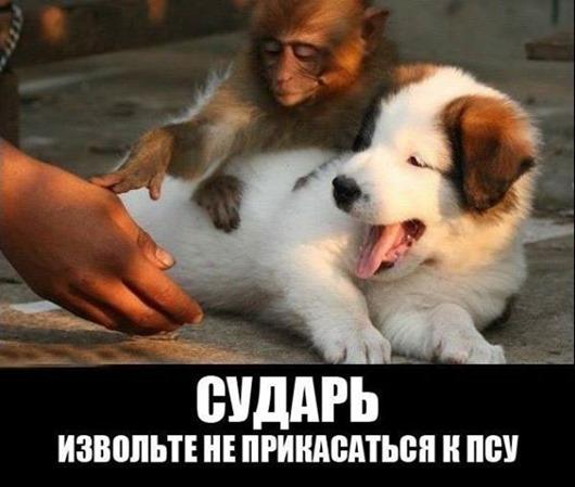 1151029_683984538295588_1189431467_n(2)