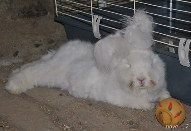 kaniner 009