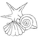 conchas-2.jpg