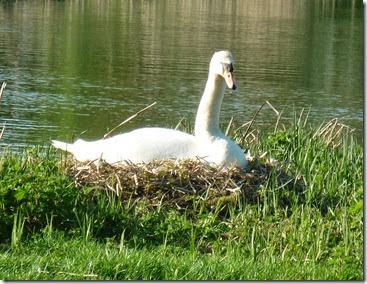nest at lock 41