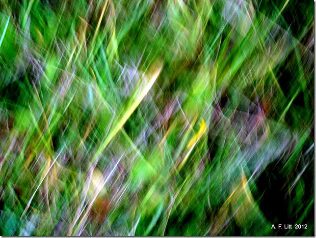 Abstract. November 6, 2012.  Photo of the Day by A. F. Litt: June 28, 2012.