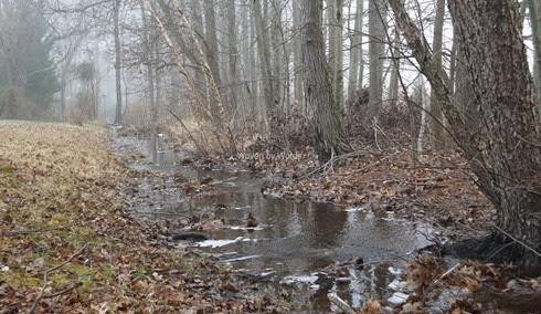 Maryland-Winter