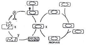 absorbsi, sintesis, lisis