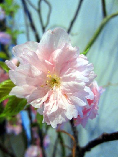 Spring wedding flowers - pink cherry blossom