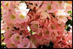 Marialva - Glória Ishizaka -  rosas