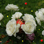 angkorsite_flower_1 (103).jpg