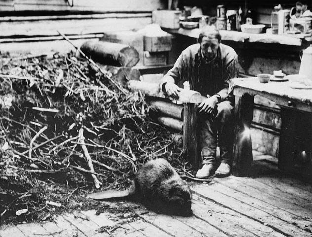 Beavers inside Grey Owl' cabin