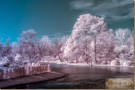 Wordless Wednesday Color Infrared of Forest Park, St. Louis, MO