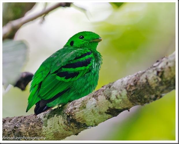 Green BB(m)2