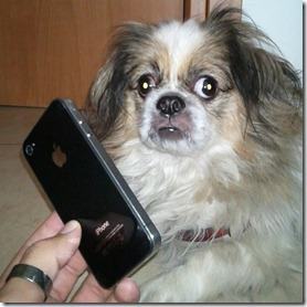 iPhone 4 and a dog