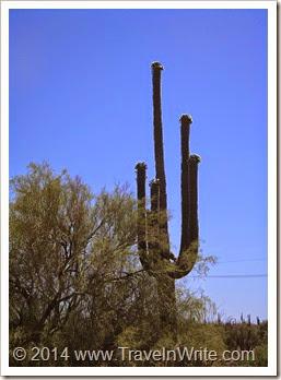 Arizona Spring 2012 131