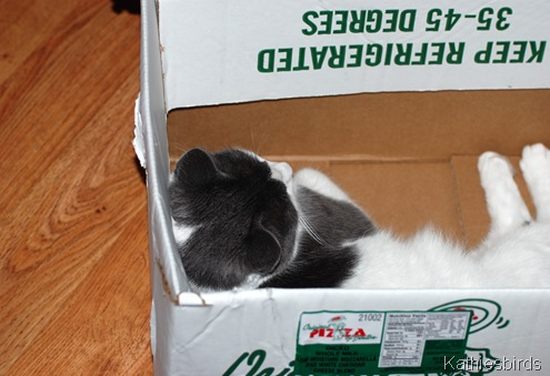 8. cat in the box-kab