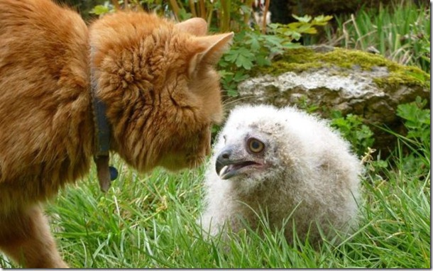 funny-animals-cute-9