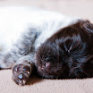 Puppies_Tria-01427.jpg