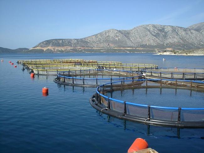 Ενίσχυση χρηματοδότησης για επενδυτικά σχέδια για υδατοκαλλιέργειες και μεταποίηση – εμπορία