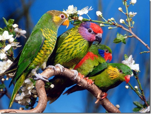 poze pasari colorate