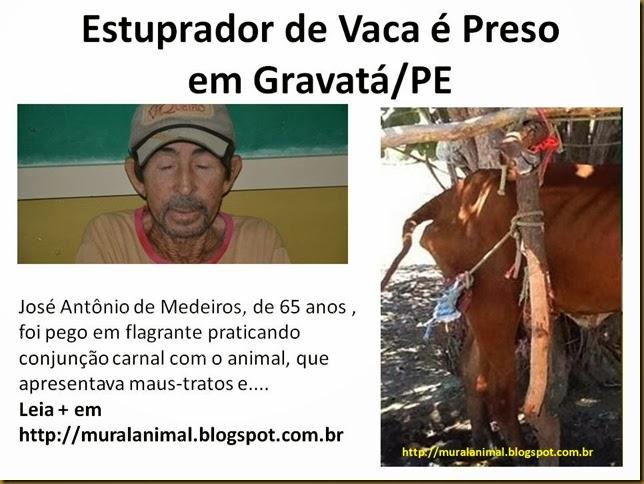 estuprador_vaca
