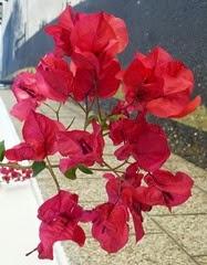 ten 117 flowers