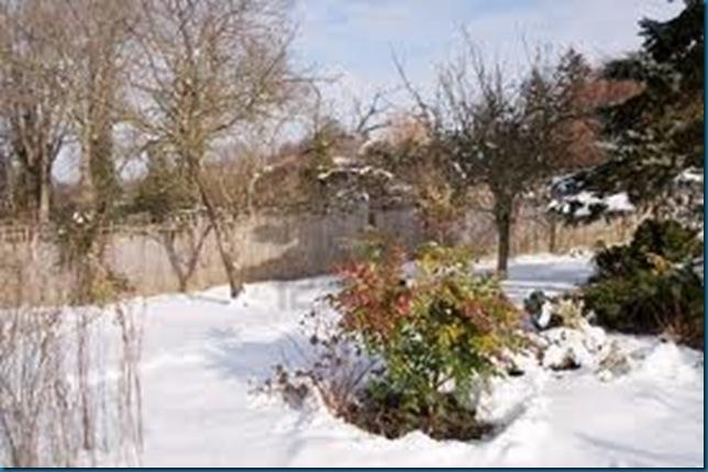 bright sunny snowy garden 123fr