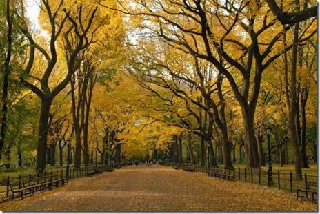 autumn-colors-fall-013