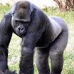 Philadelphia Zoo - Animals