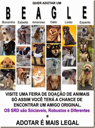 adotar_beagle