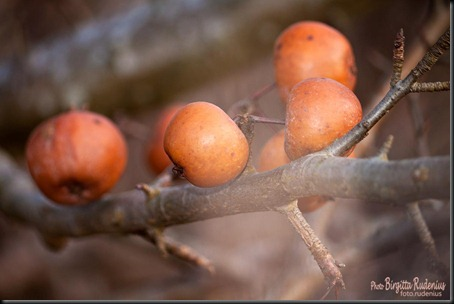 pm_20120306_apples0