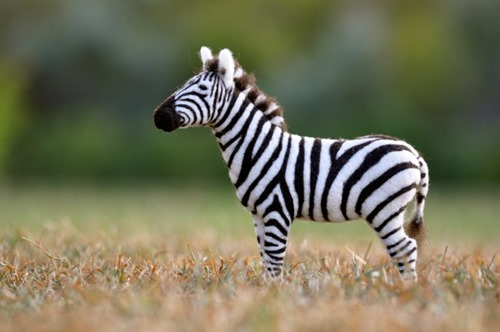 zebra wool sculpture