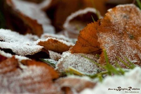 natur_20111116_frost