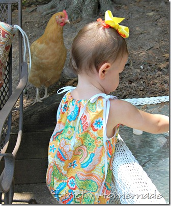 chicken checking things out