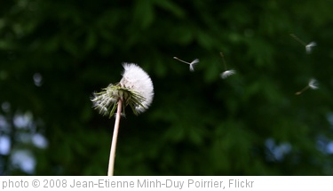 'Blowing a dandelion clock' photo (c) 2008, Jean-Etienne Minh-Duy Poirrier - license: http://creativecommons.org/licenses/by-sa/2.0/