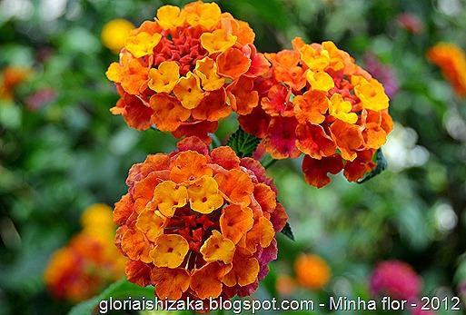 Glória Ishizaka - minhas flores - 2012 - 24