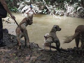 Cães em foco 1 (142)