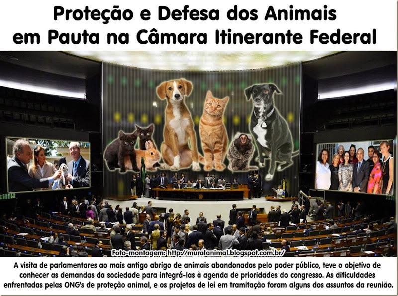 animais_camara_federal