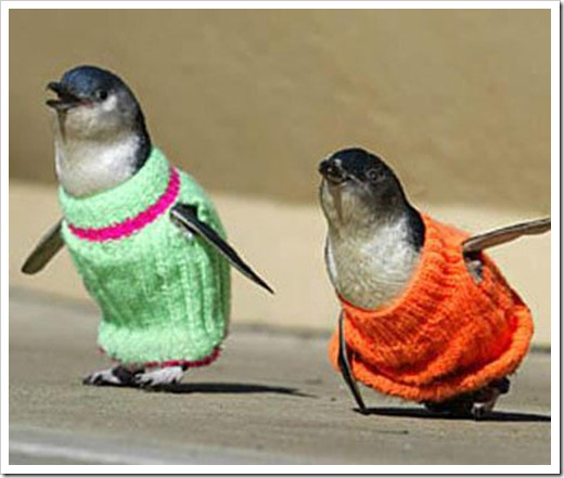 Birds in sweaters