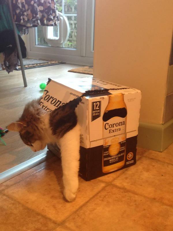 Os gatos não são muito bons em esconde-esconde 22