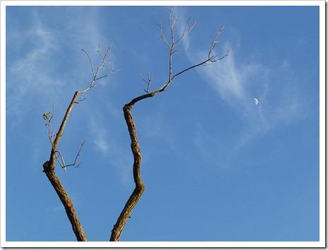 111231_tree_silhouette_14