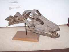2008.09.10-007 crâne de diplodocus