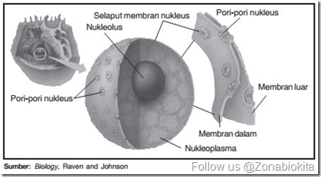 Nukleus sel_zonabiokita