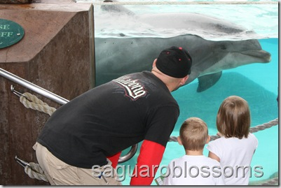 dolphin up close