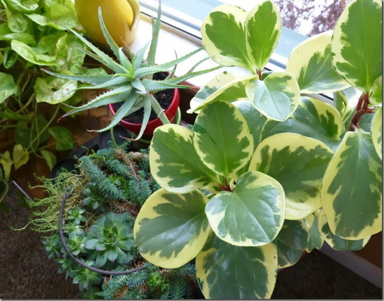 plants 019
