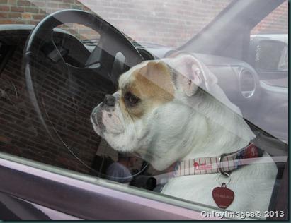 drivers seat dog