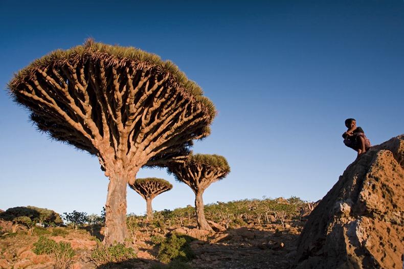 Stock image of Socotra Island - Yemen