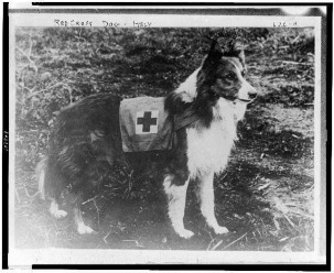 Red-Cross-dog---Italy