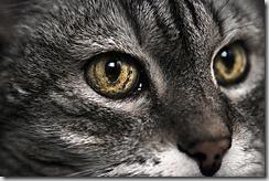 occhi gatto anziano