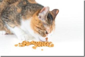 gatto-mangia-fuori-ciotola-300x199