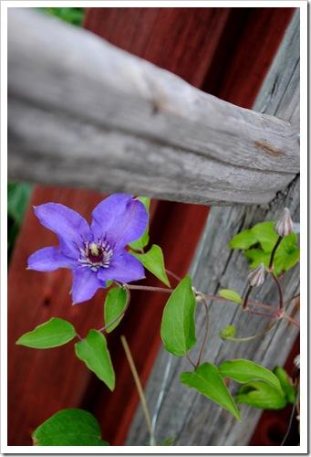 trädgården juli 2011 027