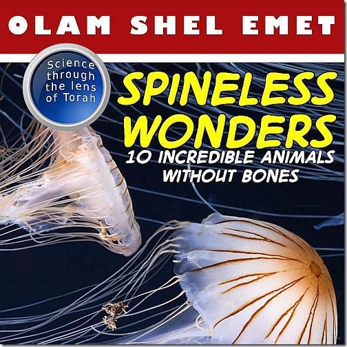 Screenshot from Olam Shel Emet:  Spineless Wonders, by Jennifer Tzivia MacLeod