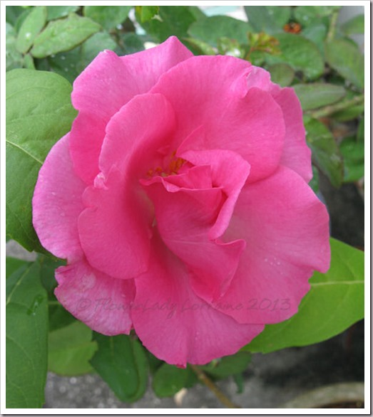 05-01-paul-mc-rose2